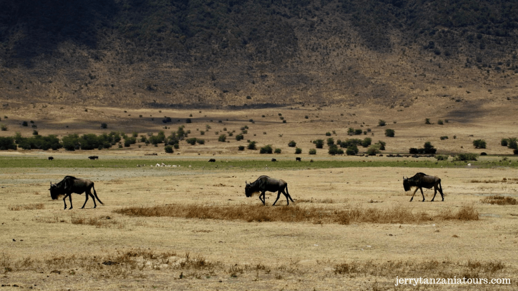 Nearly 30% Of Tanzania Is National Park