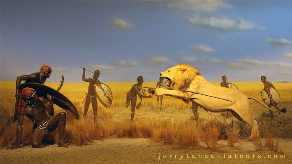 Maasai Fight with lions