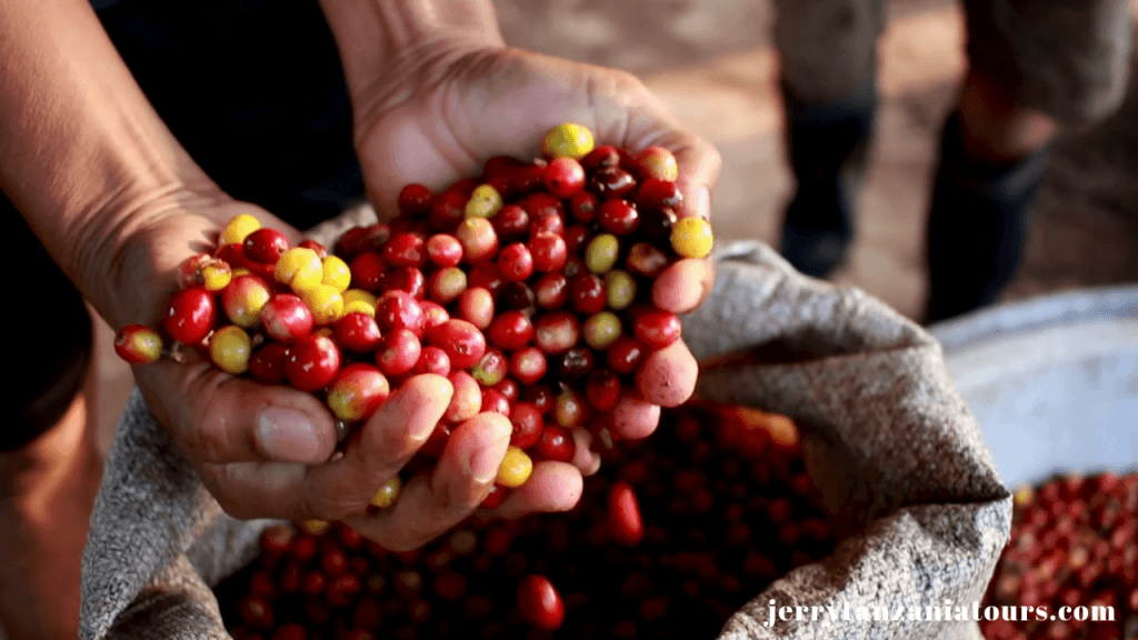Materuni coffee Tour