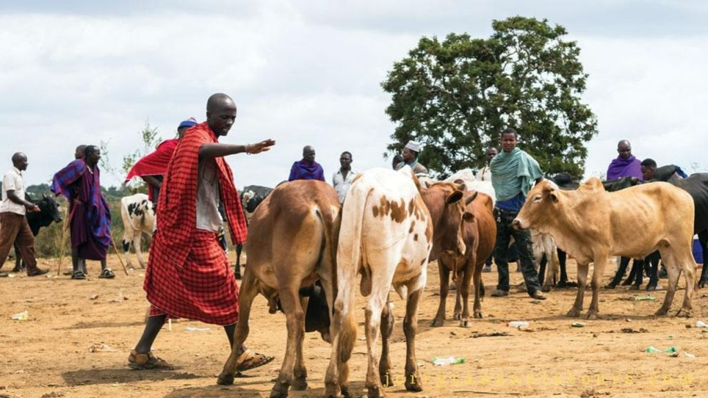 The Wealth is Measured in Terms of Cattle