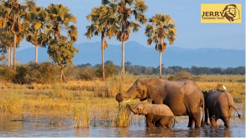 Tanzania National park