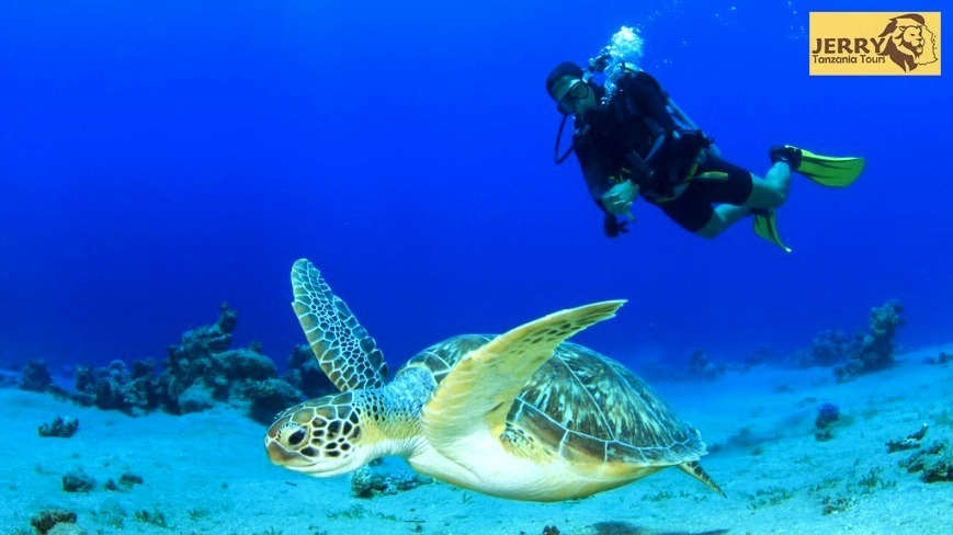 Best-Experience-Of-Snorkel-And-Scuba-Dive-Reef-Sites