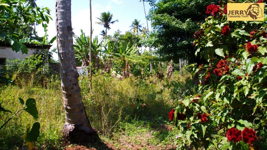 Trip-To-The-Spice-Farms-